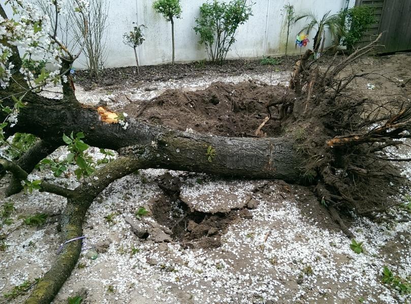Der Baum musste dran glauben