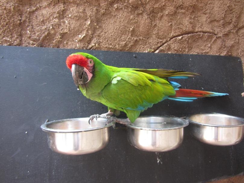 Die bunte Welt der Papageien...