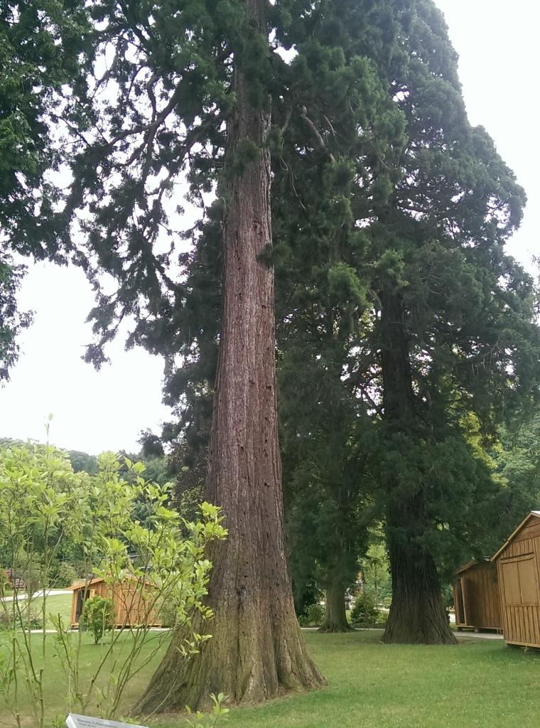 Mit Mammutbäumen in der Parkanlage