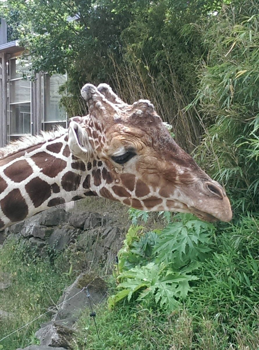 Ein Tag im Zoo Duisburg