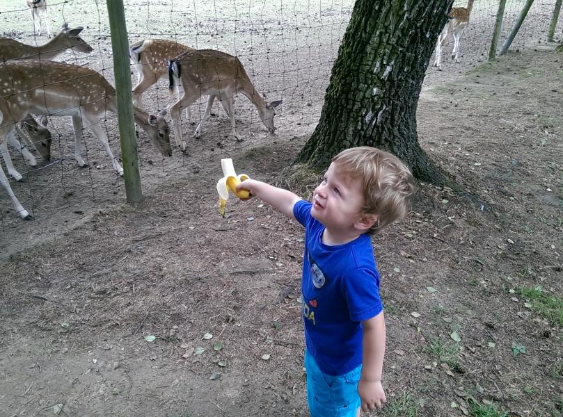 Pass auf, sonst ist die Banane gleich weg!