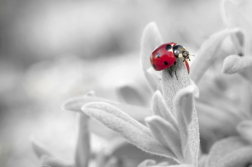 ladybug-796483
