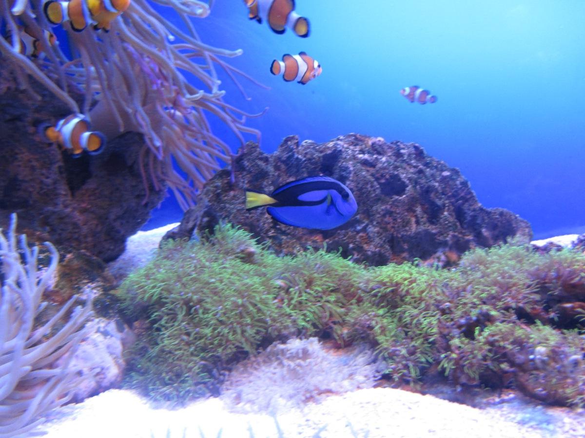 Unterwasserwelten - Reisetagebuch Tag 4