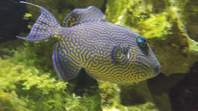 Farbenfroher Fisch