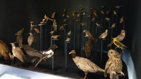 Heimische Vögel, dessen Stimmen man hier anhören kann
