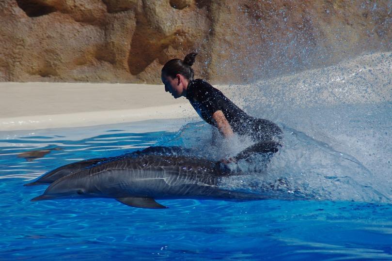 dolphin-358382_1920